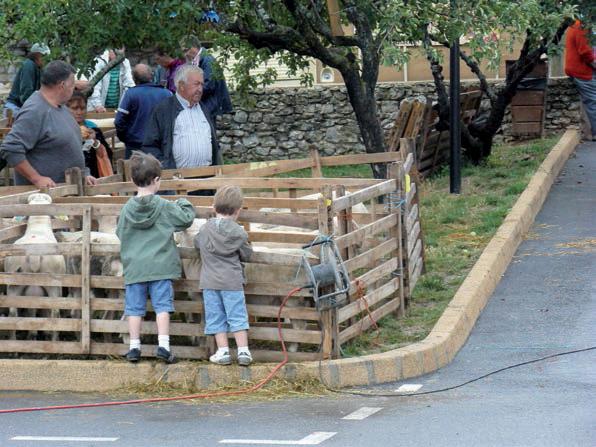 foire-concours-agnelles-beliers-2
