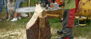 fete du bois Sault