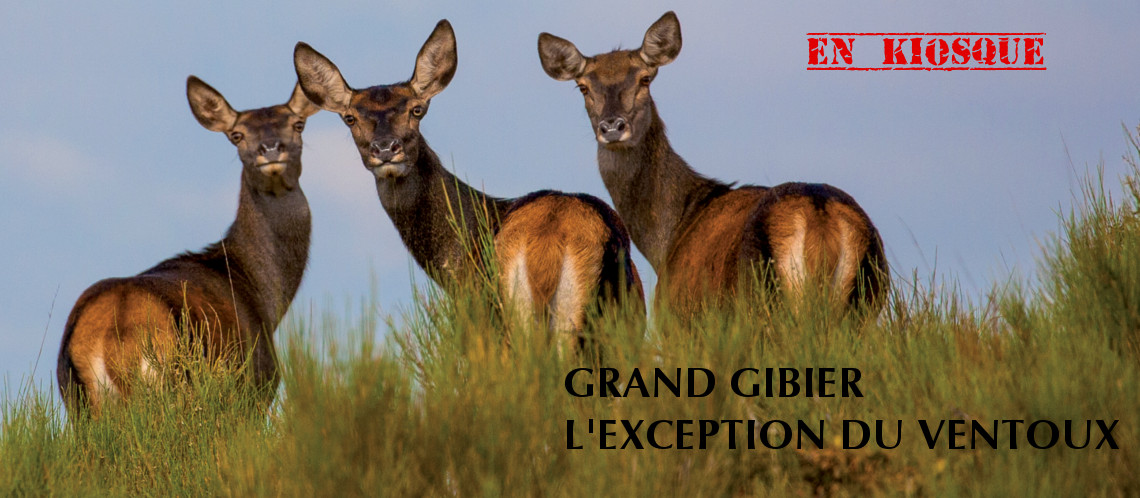 Grand gibier : l'exception du Ventoux