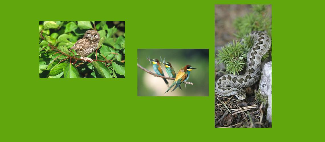 Deux mois de voyage en biodiversité vauclusienne