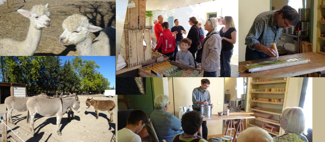 Festival Ventoux Saveurs : Succès de la visite de la ferme Oustau Safr'âne à Monteux